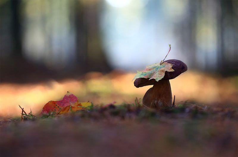 осень,лес,грибы. Золото осени.photo preview
