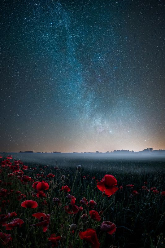 milkyway latvia poppies fog  Poppies and starsphoto preview