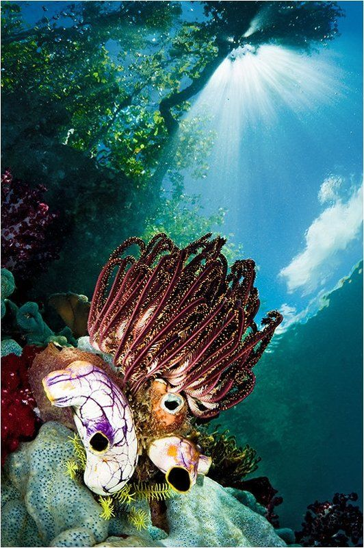 раджа, ампат Подводный светphoto preview