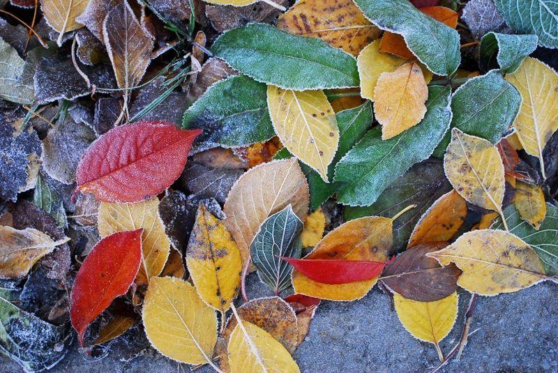 color color photophoto preview