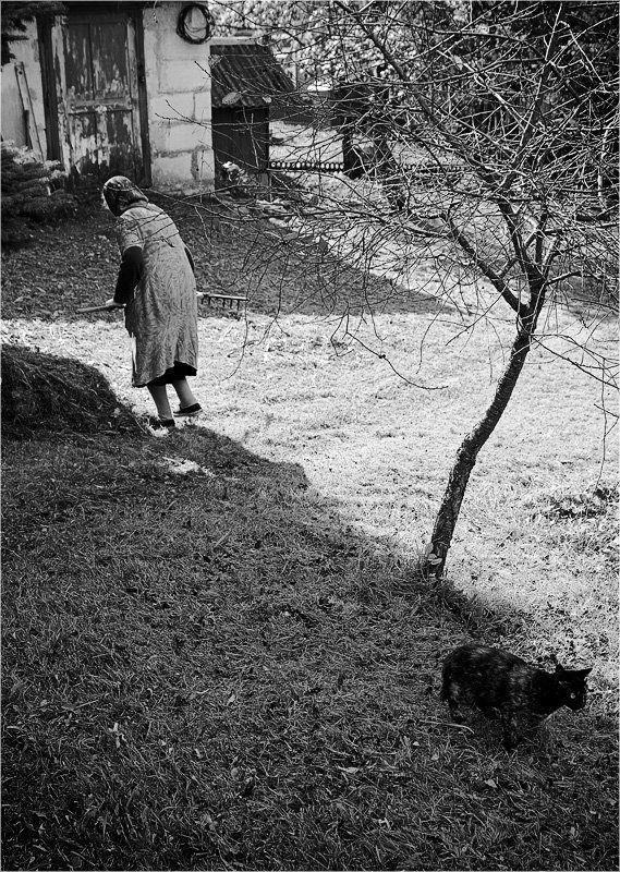 бабушка, кошка, дерево /photo preview