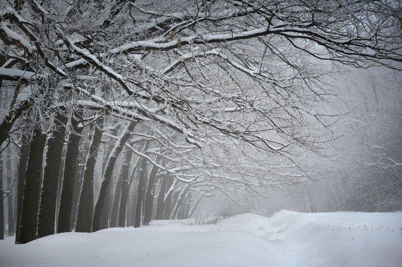 Ритмы зимнего лесаphoto preview