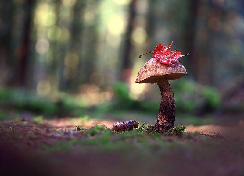 Осень,лес,гриб. Франт.photo preview