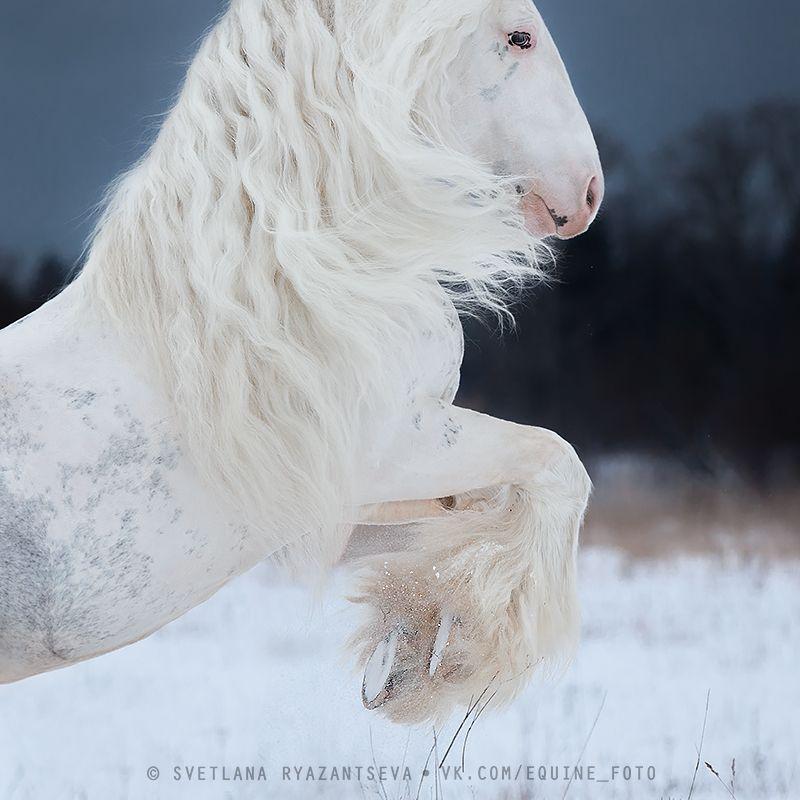 horse, лошадь, лошади, portrait I believe I can flyphoto preview