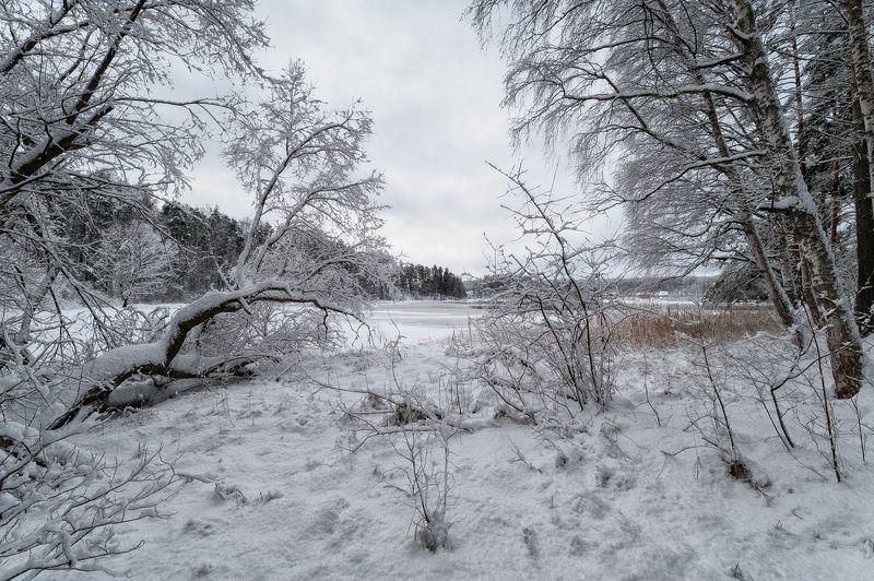 зима,снег,лед,река,вуокса,картина,берега,пейзаж Зима рисует снежные картиныphoto preview