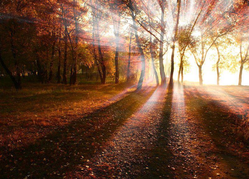 осень, лучи, солнце Портал.photo preview