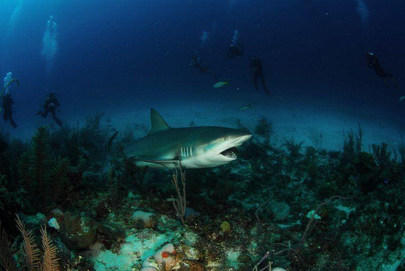 акула photo preview