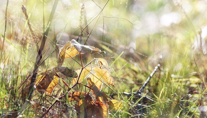 осень, лес, природа ***photo preview