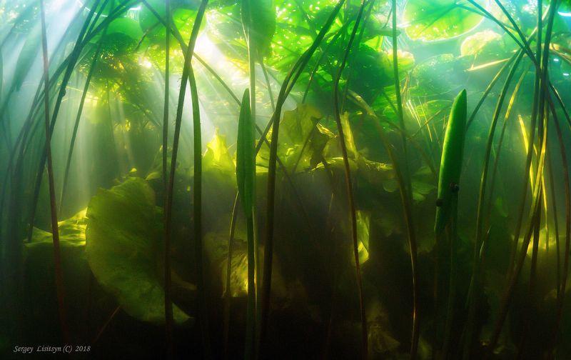 Обратная сторона реки.photo preview