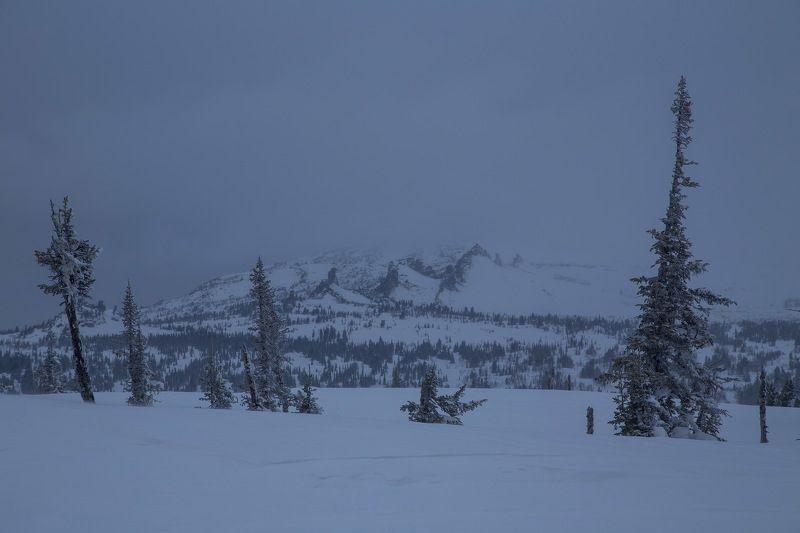 шерегеш, снег, ветер, метель, мороз, горы, деревья, пейзаж, природа, закат, снежинки Сибирские склоны Горной Шории.photo preview