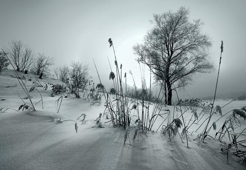 свет, утро, туман, деревья, лучи, солнце, зима, снег, тени, мороз Солнце встаётphoto preview