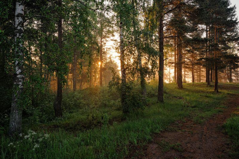 лето,утро,рассвет,краски,лес,свет,пейзаж Краски летнего рассветаphoto preview