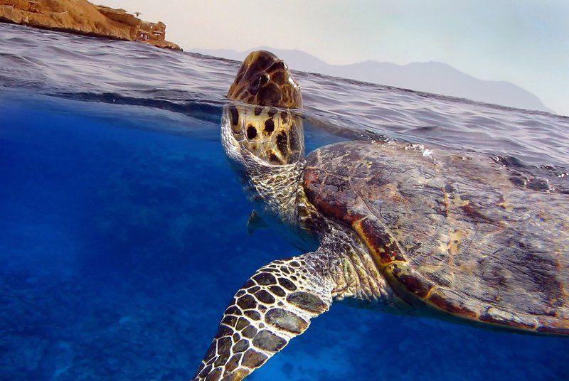 черепаха Вдохнуть... и не дышатьphoto preview