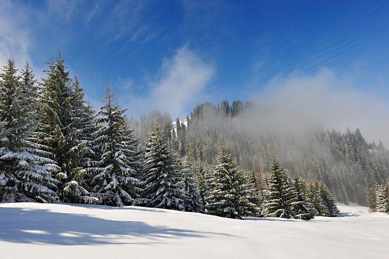 алматы, казахстан, горы, зима Морозная свежестьphoto preview
