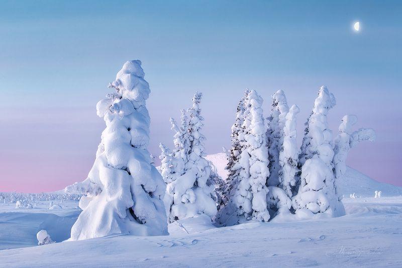 пломбир, зима, урал, гух, главный уральский хребет, пейзаж, рассвет, ель Родом из детстваphoto preview
