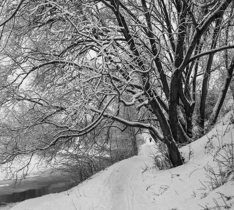 жанр, ч/б, снег, b&w, black and white,черное и белое, черно-белое,графика, плетёнка, рязань Щупальца зимыphoto preview