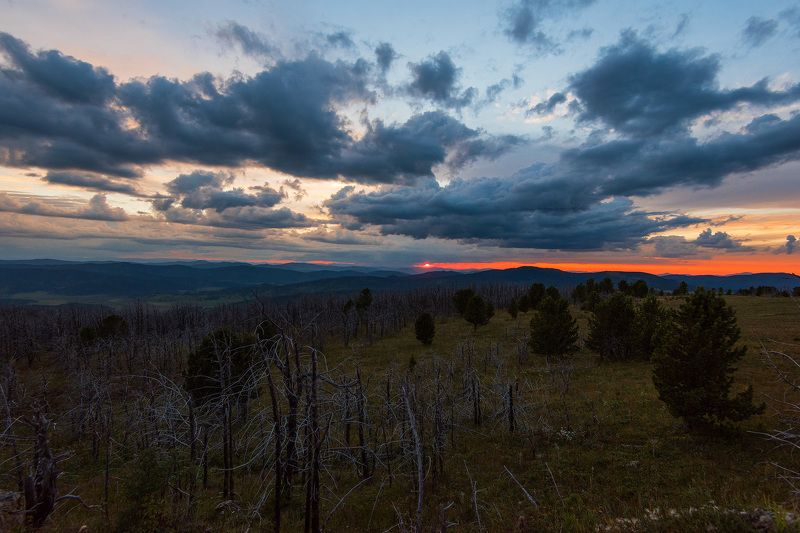 алтай, горныйалтай, семинский Dead forestphoto preview