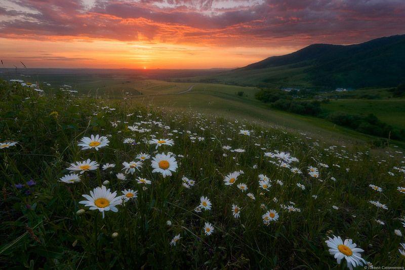 пейзаж, восход, рассвет, лето, горы, цветы, ромашки, небо, тучи, свет Летний восходphoto preview