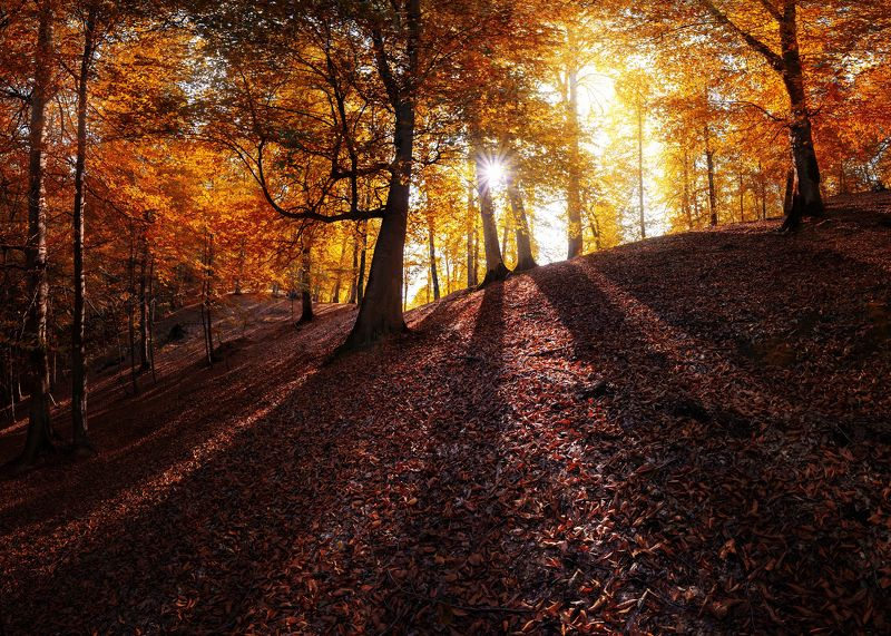 landscape autumn Autumn viewphoto preview