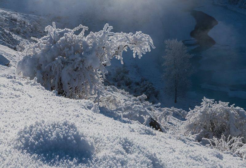 алтай, сибирь, иней, чуя, зима, стужа, январь Снежный крокодилphoto preview