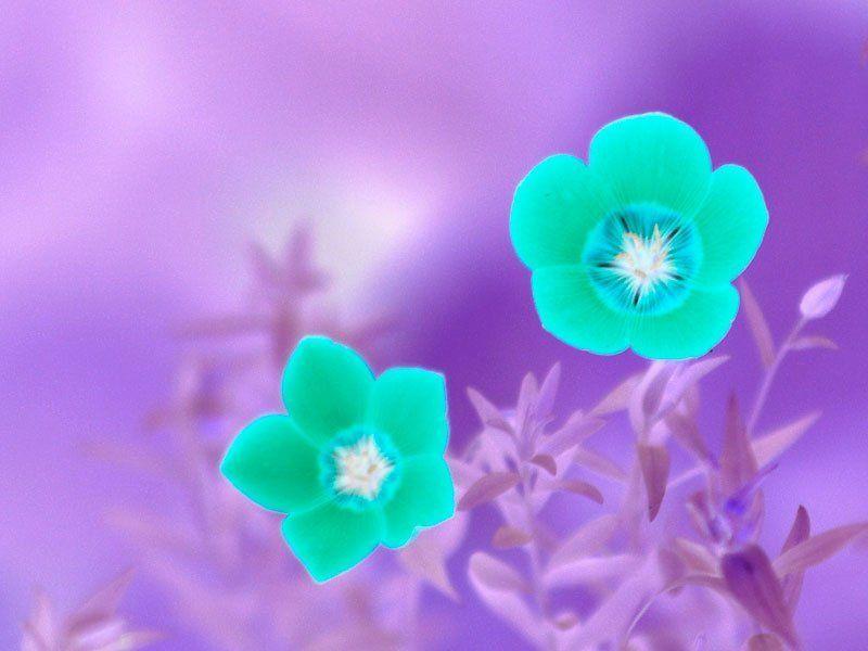 цветы * * *photo preview