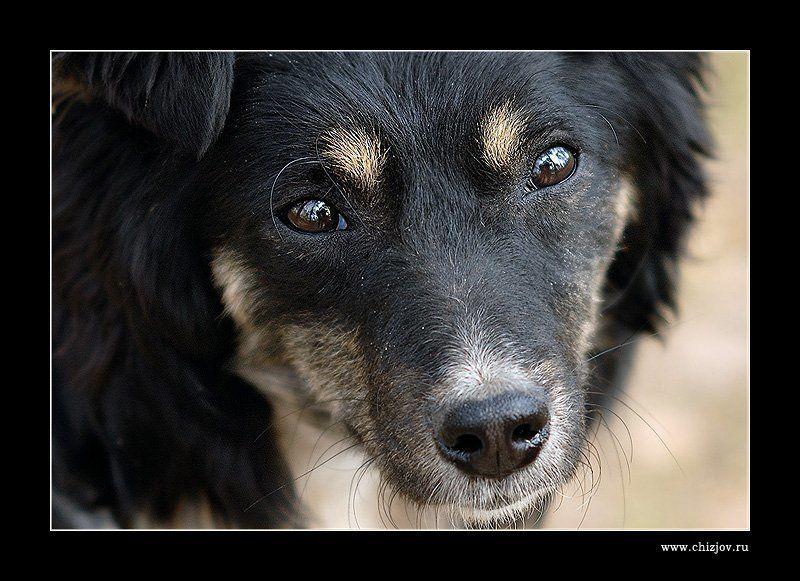 пес, собака, друг Пёсphoto preview