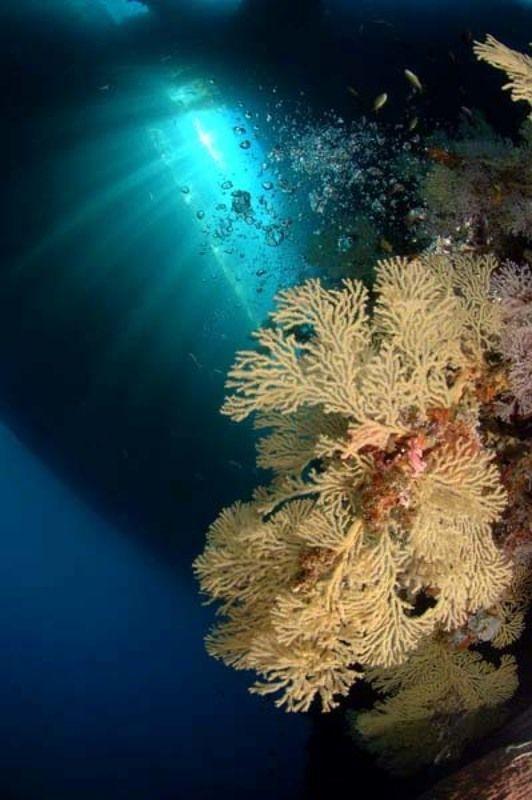 море, коралл, дайвинг, природа, пейзаж Сила светаphoto preview