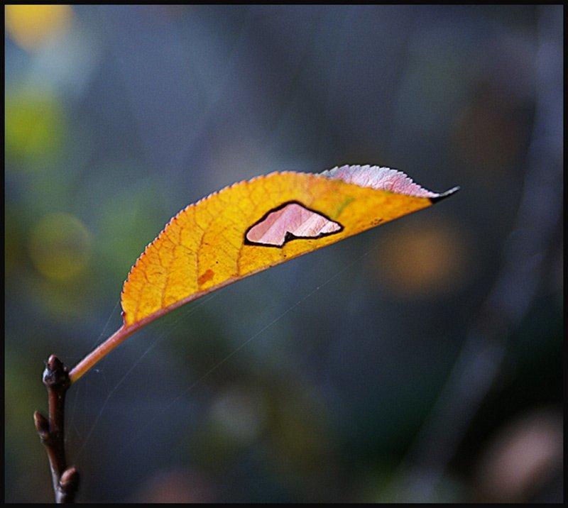 лист, солнце, ожог, сердце Сердцеphoto preview