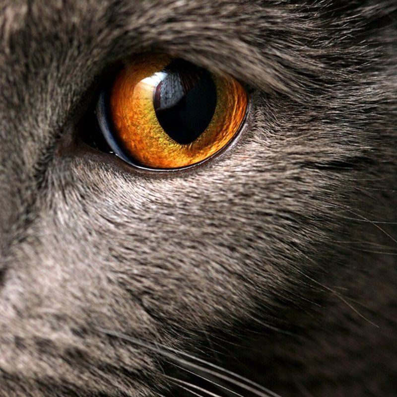 кот, кусачий, 6х6 ***photo preview
