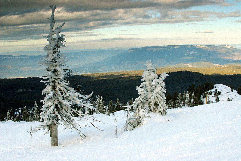 босния, природа, снег, елка Босния #1photo preview