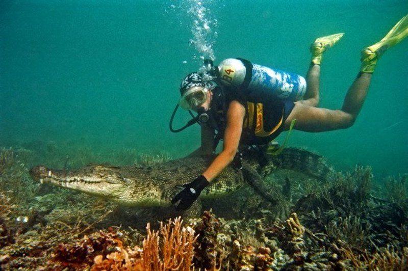 море, крокодил, природа Укротительницаphoto preview