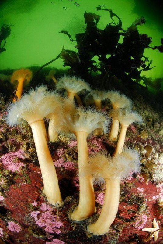 море, природа, актинии, животные Актиневый райphoto preview