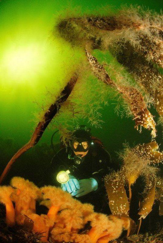 море, природа, актинии, животные,дайвинг photo preview