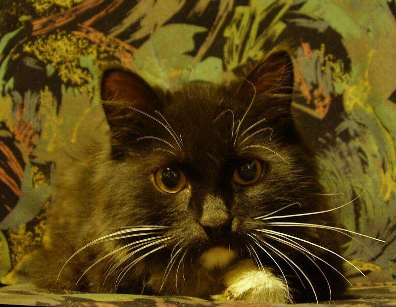 котенок беспризорник Беспризорник из автосервиса. Мимикрияphoto preview