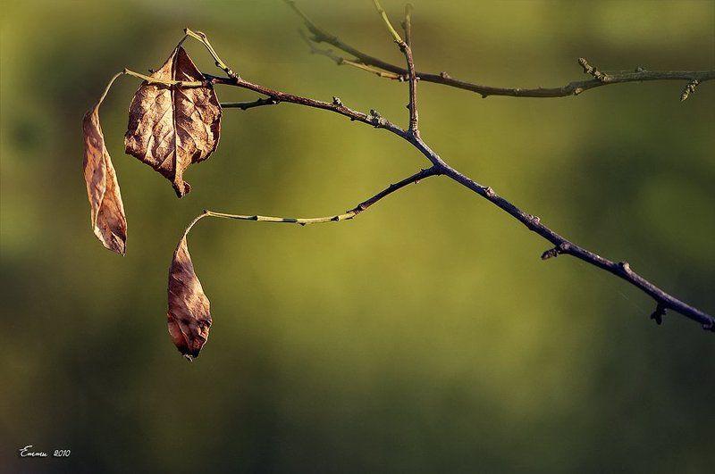 листья, природа, ветка листьяphoto preview
