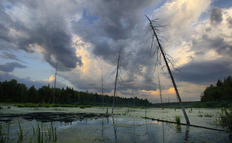 болото Уединённое место для влюблённых...в охотуphoto preview