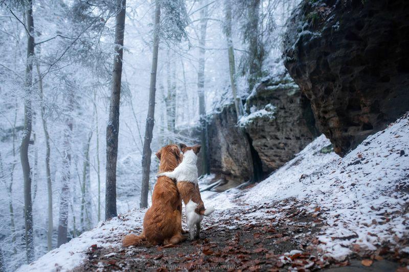 собака, природа вместе photo preview