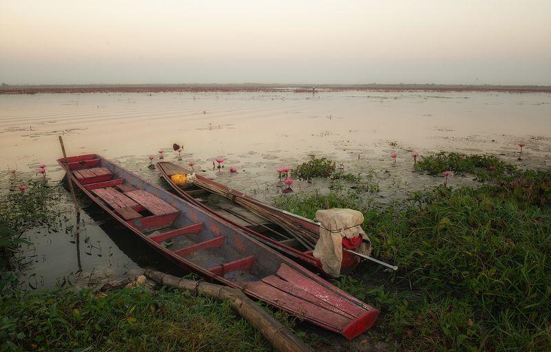 озеро, путешествие, пейзаж, рассвет, удон тхани, таиланд, udon thani. Озеро Красных лотосовphoto preview