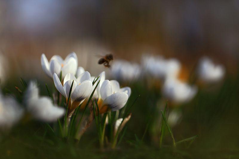 Весна,цветы,солнце. Все к солнцу!photo preview