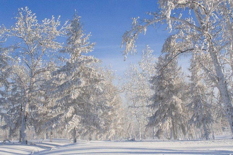 Зимний лесphoto preview