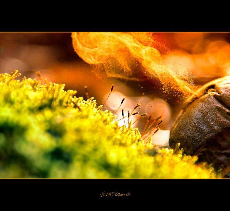 red, bokeh, green, smoke, moss, dry, mushroom Micro flamephoto preview
