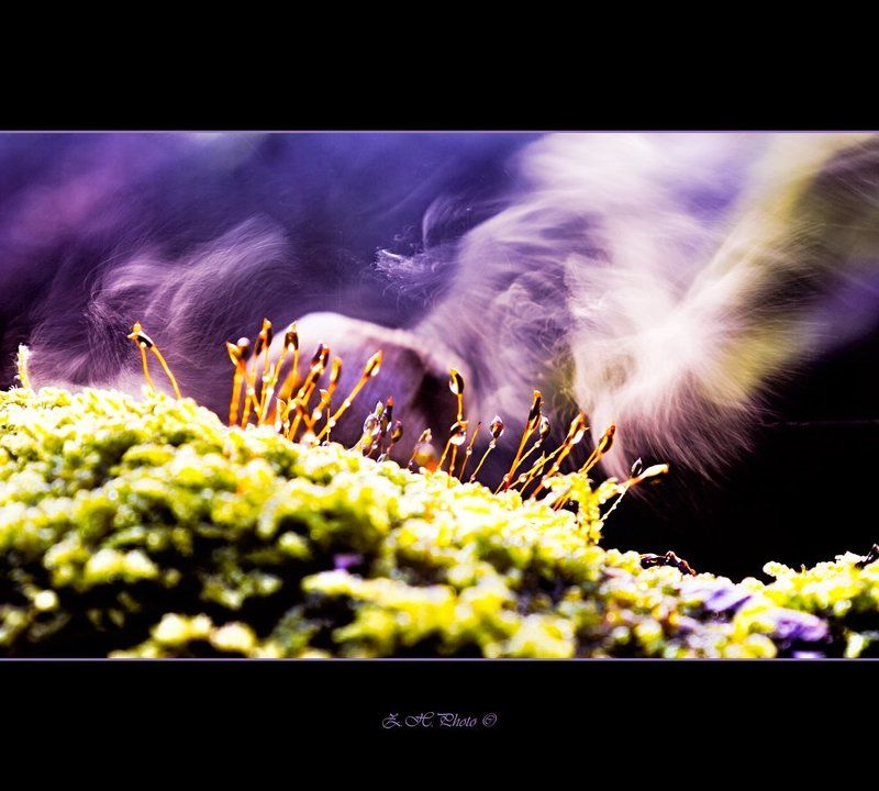 bokeh, smoke, seeds, moss, dry, mushroom Galactic winds of changephoto preview