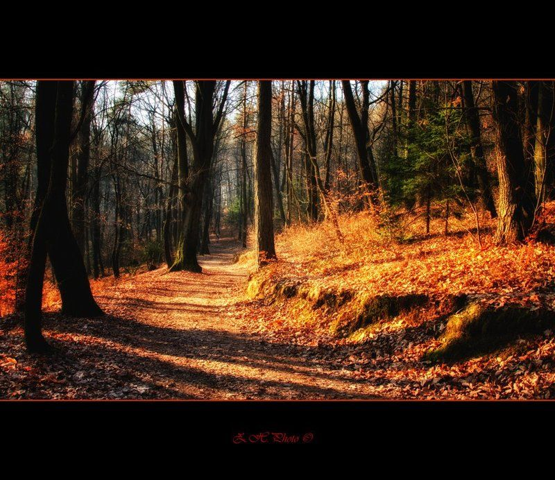 autumn, sunrise, forest, colors, woods, false In The Woodsphoto preview