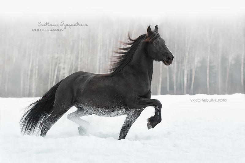 horse, лошадь, лошади, portrait winterphoto preview