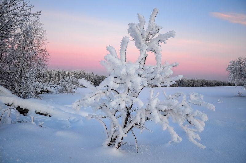 удмуртия, зима, иней,кез Перед рассветомphoto preview