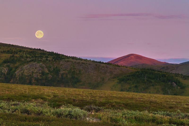 PhotoJourneysRu, чукотка, тундра, этнотур, фототур, экотур, национальныйпарк, берингия Чукотская лесотундраphoto preview