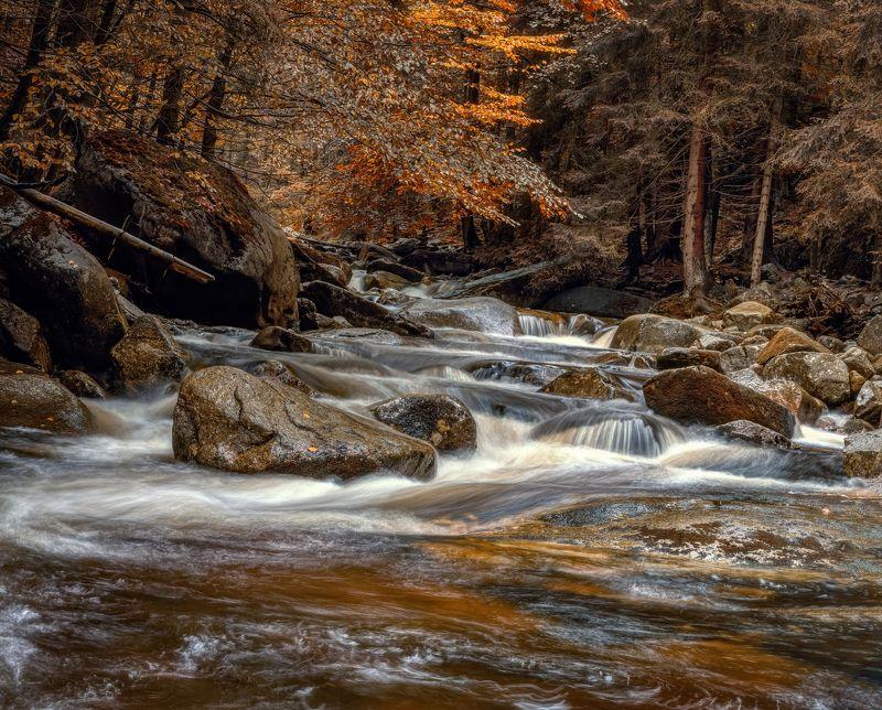 природа лес деревья осень листва путешествия пейзаж тени чехия вода река водоём камни Мумлавские порогиphoto preview