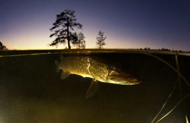 karelia, underwater, russia Страж озераphoto preview