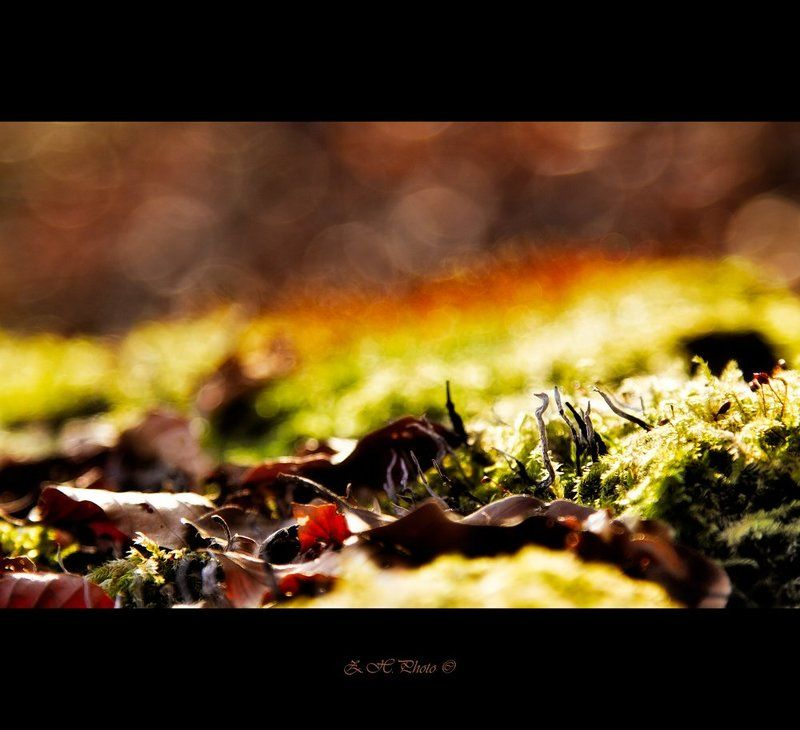 leaves, forest, bokeh, moss The sun is comingphoto preview