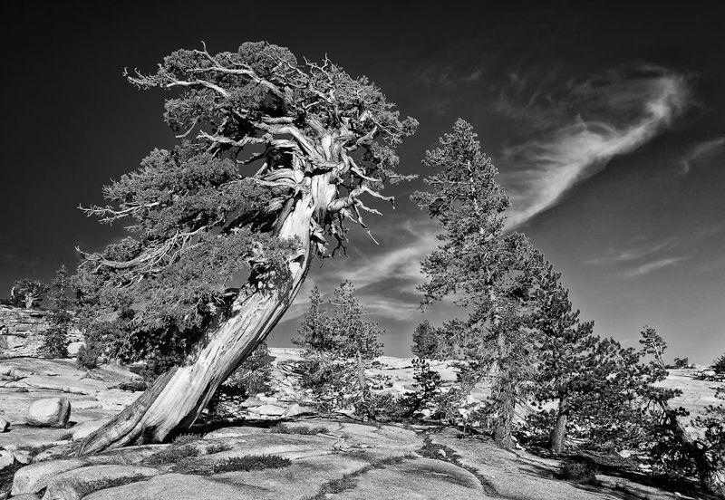 yosemite, tree Противостояниеphoto preview